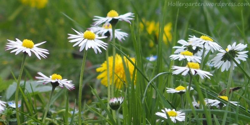 Wiese statt Rasen